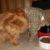 Ragnar kissan olkalihaksen repeämä